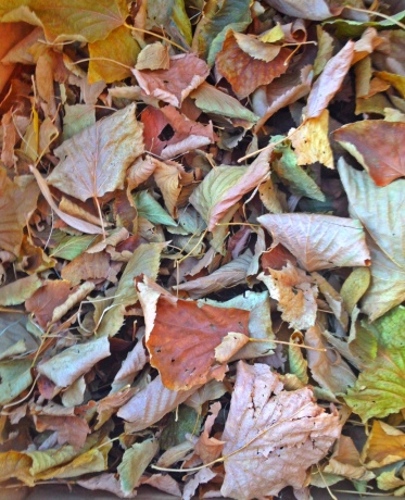 Dead leaves & the dirty ground